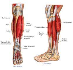 bruciore all interno della dolore al muscolo della gamba sinistra come si cura