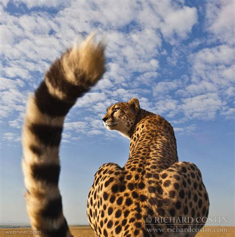 10 Amazing Portraits Of Animals by 35 Beautiful And Stunning Wildlife Photography Exles