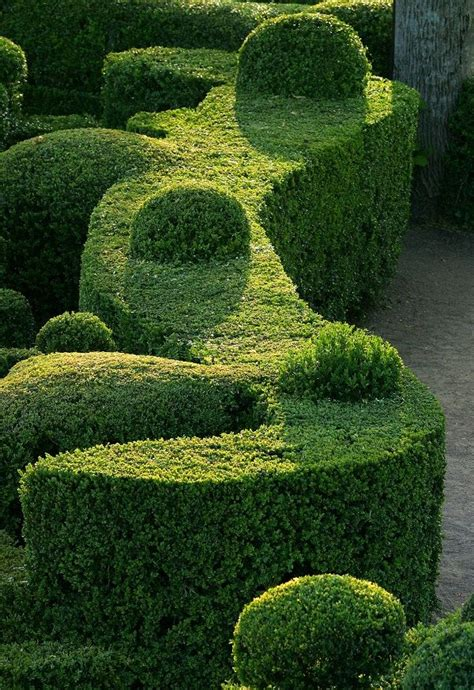 choosing the best plants for hedges garden yard pinterest
