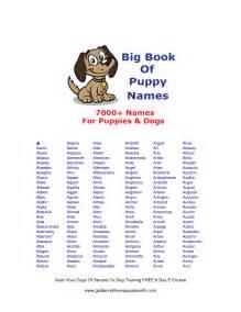Cute facebook names cute original dog names puppy