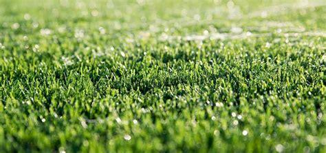 artificial grass houston tx  pet safe ideal turf