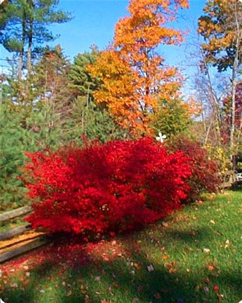 top 28 when does a burning bush turn 301 moved permanently life blessings burning bush