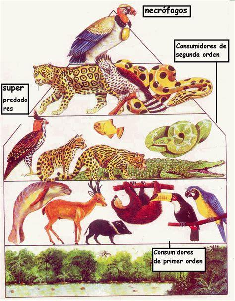 cadenas alimentarias piramides ecologicas los ecosistemas componentes funcionamiento niveles