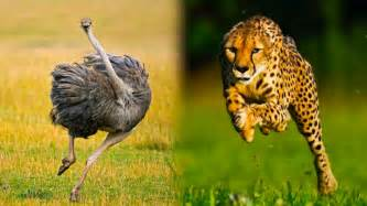 What Is The Fastest Top 10 Ridiculously Fast Animals
