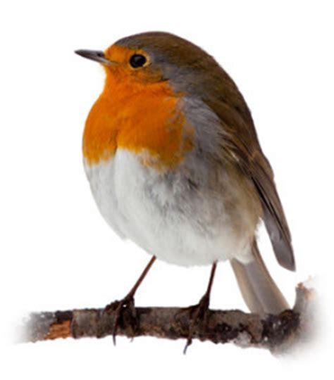 rawdon littlemoor school 187 robins