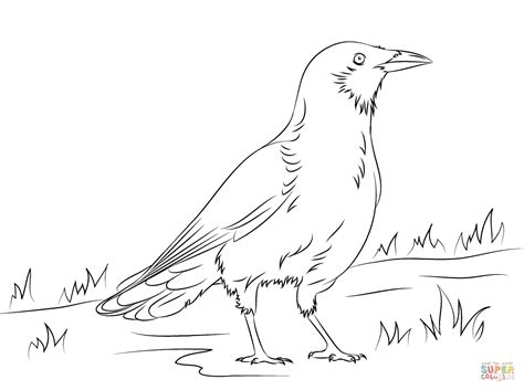 crow bird coloring page american crow coloring page free printable coloring pages