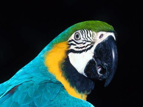 imagenes de aves asombrosas fotos de p 225 jaros ex 243 ticos