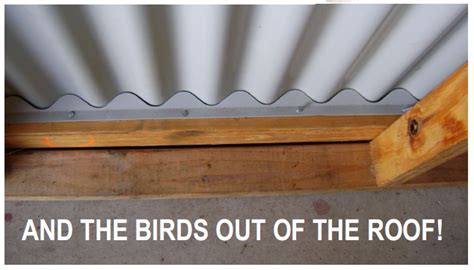 How To Get A Bird Out Of The Garage by Handyseal A Handy Pvc Seal For Corro Or Custom Orb Roofs