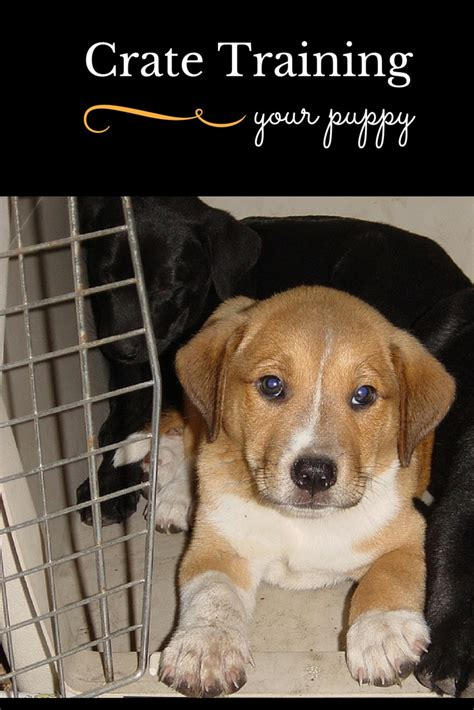 crate a puppy at tips for crate your new puppy vills