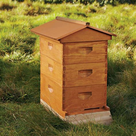 backyard honey bee hive backyard beehive starter kit the green head