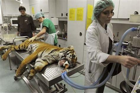 imagenes de medicas veterinarias espa 209 oles con duende veterinarios m 233 dicos y peluqueros