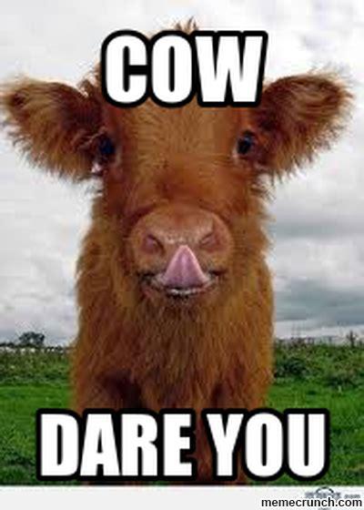 Cow Meme - cow