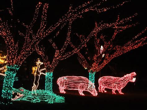 Image Gallery Oregon Zoo Lights Portland Or Zoo Lights