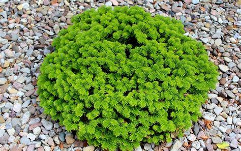 Kies F R Den Garten 48 by Pflanzen F 252 R Steinbeet Steinbeet Gestaltung 22 Bilder Und