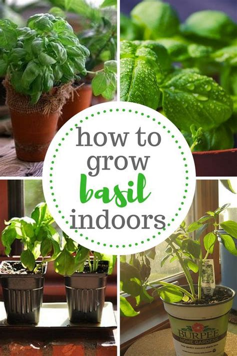 indoor herbs to grow 99608 best images about great gardens ideas on pinterest