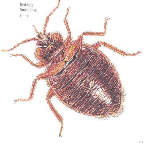 bed bug vs tick quantum pest control