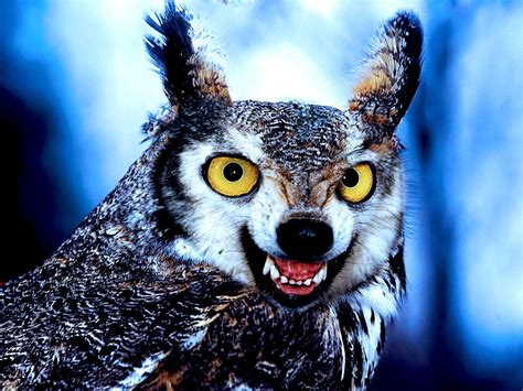 Owl Wolf wolves and owls pictures to pin on pinsdaddy