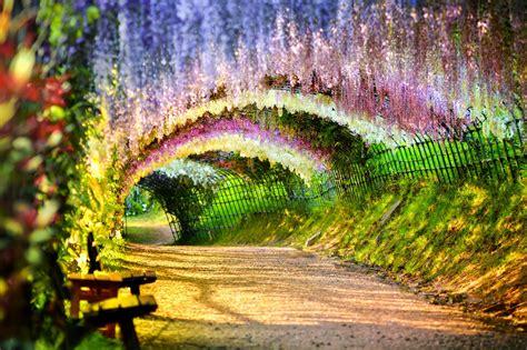 wisteria flower tunnel ahantu hadasanzwe utakwemera ko haba kuri iyi si dutuye
