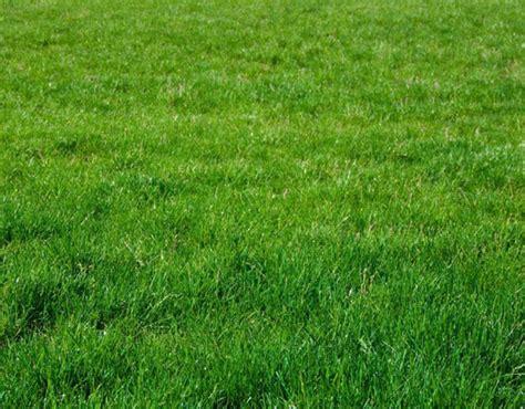 tutorial photoshop grass photoshop tutorial adding grass to an image garymoyers com