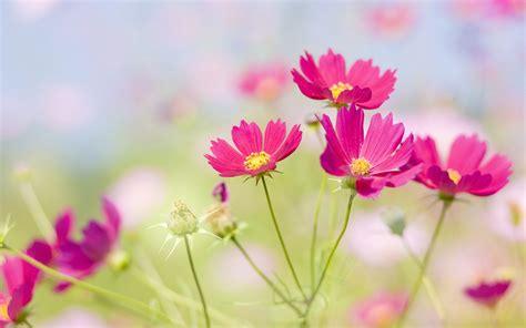 imagenes fondo de pantalla flores fondos de escritorio de flores con pantalla ancha de cerca
