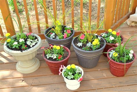 images of 6 flowers in pots color filled flower pots sprucing up the outdoors for series