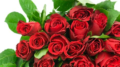 1080p Red Rose Wallpapers, Gallery of 45 1080p Red Rose