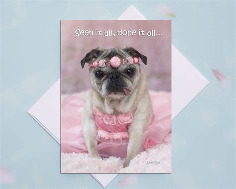 pugs and kisses card 5x7 all occasion card seen it all pug card by pugs and kisses