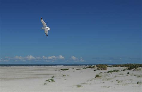 flying on bird flying seagull 183 free photo
