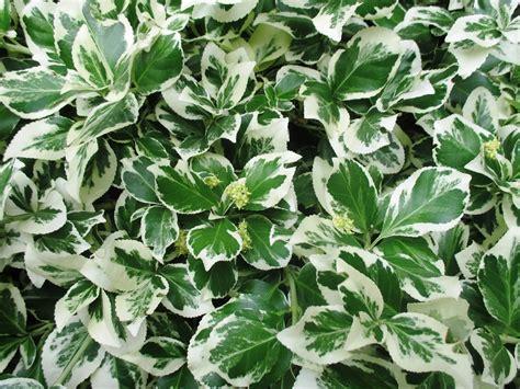 Tanaman Hias Daun Suplir Microfilm foto gratis semak tanaman hias taman daun gambar gratis di pixabay 373446
