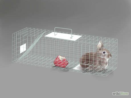 get rid of rabbits rabbit