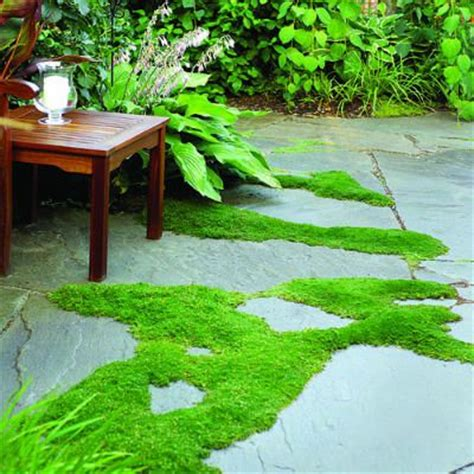 Patio Pavers With Moss In Between Diary Of A Diy Backyard Makeover