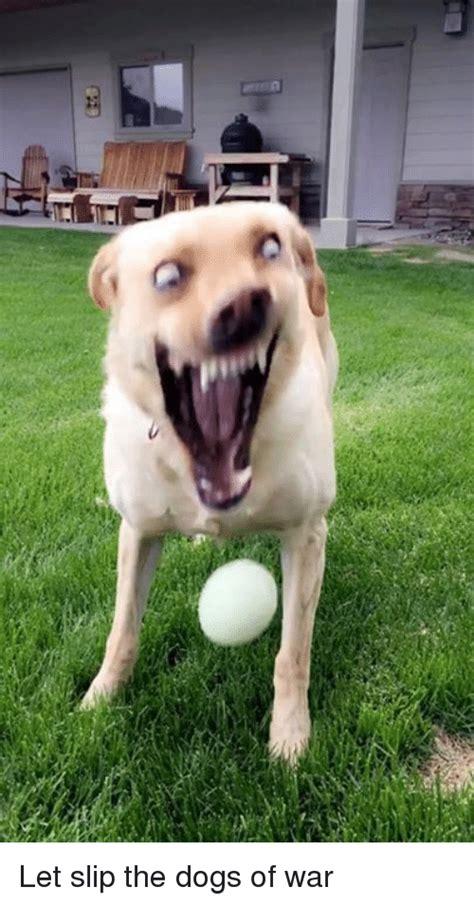 memes  dogs  war dogs  war memes