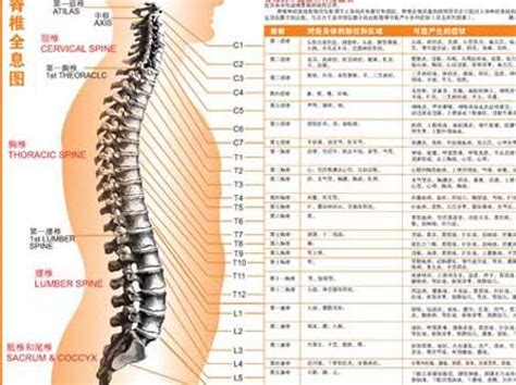 diagram of spine discs spinal diagram health