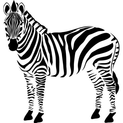 imagenes de cebras en blanco y negro vinilos folies vinilo decorativo cebra