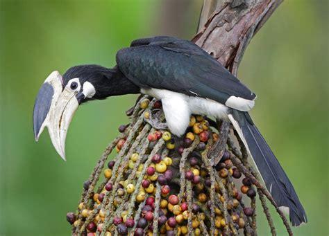 rare birds exotic birds its evalicious