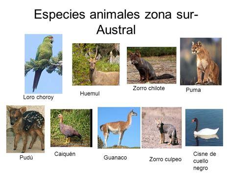 Fauna De La Zona Sur Chile En Imagenes | fotos animales zona sur de chile los seres vivos en la