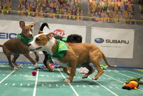what channel is the puppy bowl on puppy bowl nfl primetime sportscenter top cable sports ish tv ratings for sunday
