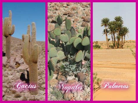 imagenes de animales y plantas del desierto desierto flora y fauna