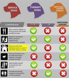 types of service dogs dogs and types of and dogs on