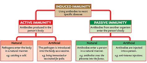 Different Types Of Immunity Diagram