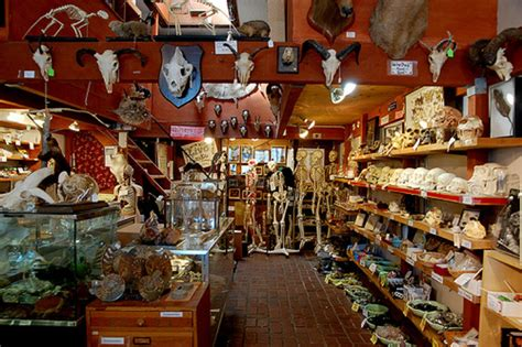 shop by room berkeley curiosity shop the bone room is closing its