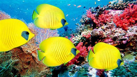gopro coral reefs adventure deep ocean  resolution