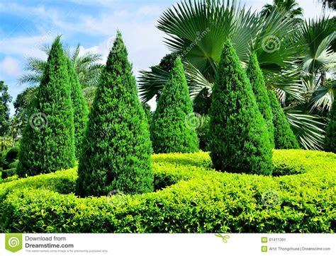 pini da giardino giardino con i piccoli pini immagine stock immagine di