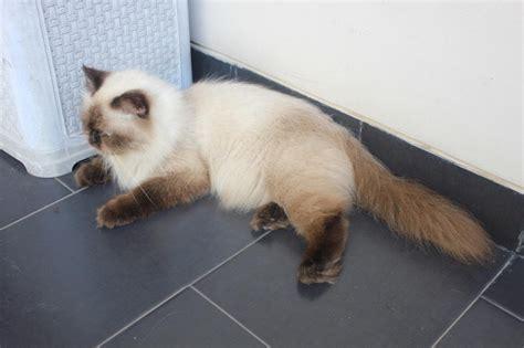 Boneka Hewan Kucing Imut 40 foto kucing gambar gambar kucing lucu