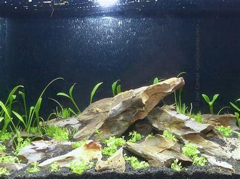 aquascape definition l aquascaping d 233 finition et cr 233 ation d un aquarium plant 233