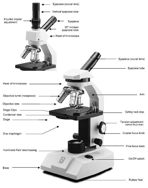 compound microscope diagram anatomy and physiology i coursework microscope a p
