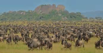 Tiny Plains tanzania migration safari africa safaris natural habitat