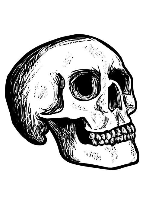 imagenes de calaveras a blanco y negro opiniones de calavera desambiguaci 243 n