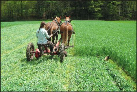 Cultivating Questions: The Cost of Working Horses ? Small
