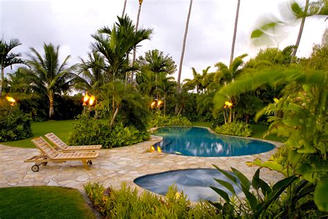 backyard palm trees garden landscaping ideas to help create an outdoor haven